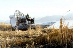 airboat-80